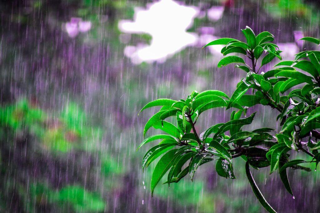 spring rains